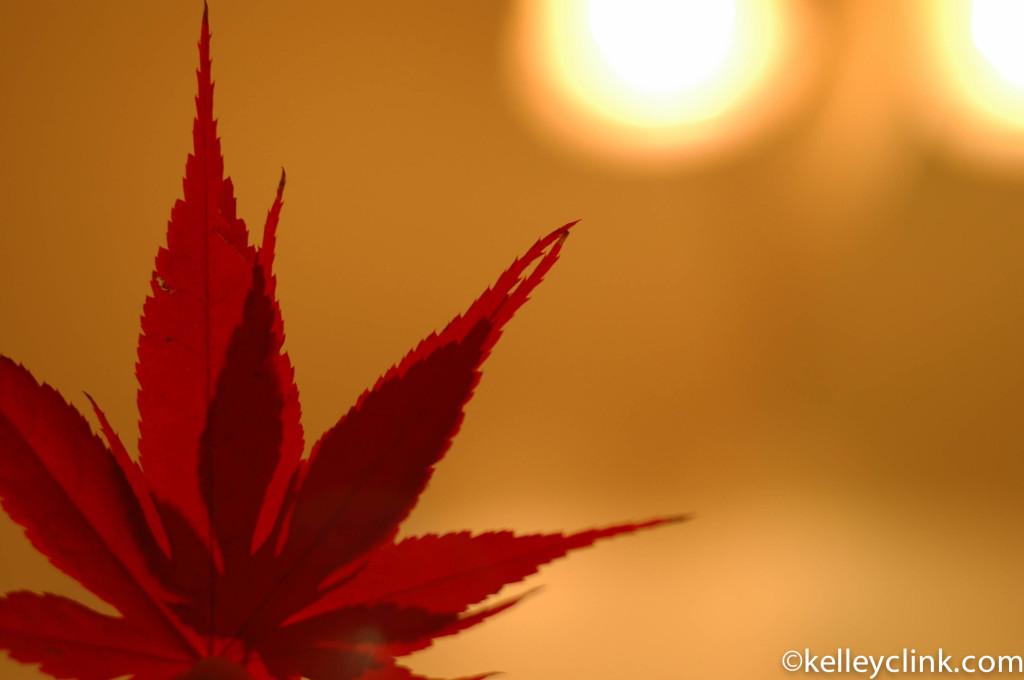 Sun shine down kelley red leaf